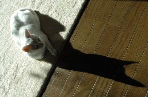 キラリのひなたぼっこ